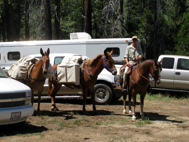 Man on horseback, two pack mules