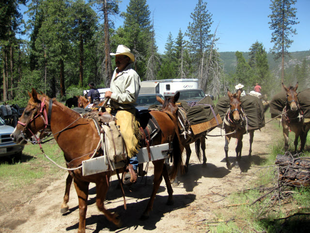 Man on horseback, three pack mules