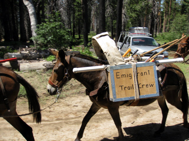 Mule with pack boxes