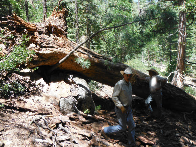 Two men standing in front of a large downed tree