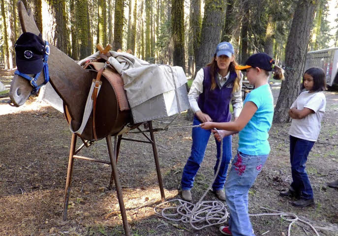 Learning to to pack a mule