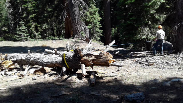Large tree blocking trail